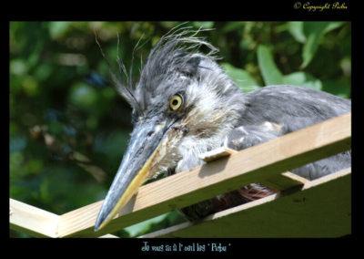 23-héronneau-au nid-lilas mottay-léman