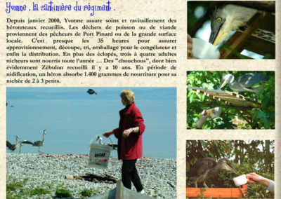 25-nourriture-hérons-Y. Picbu-rivage port pinard