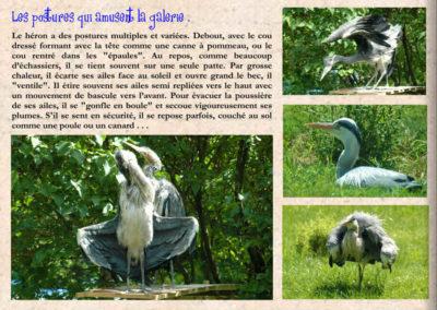 43-herons-conservatoire littoral