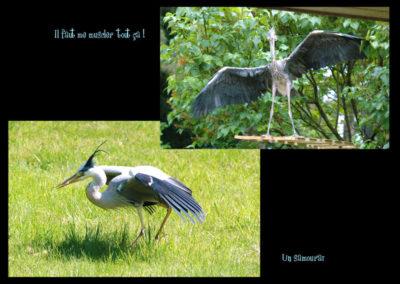 50-herons-postures-conservatoire littoral