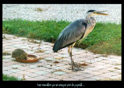52-herons-rencontre insolite-léman