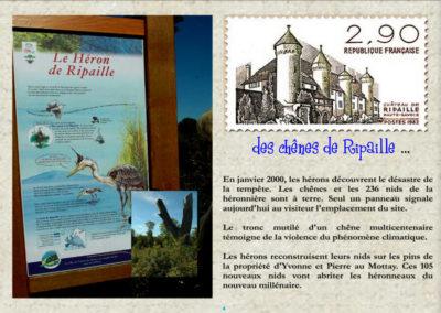 4-ripaille-mottay-heronniere-tempete-lothar