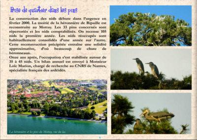 6-33 nids herons-loïc marion-nantes