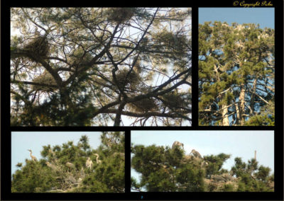 7-installation dans les pins
